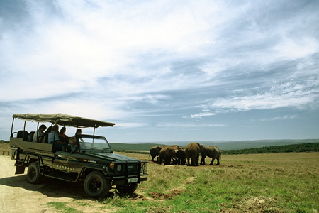 Game Drive Addo Elephant Park